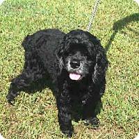 Adopt A Pet :: Georgia Belle - North Little Rock, AR
