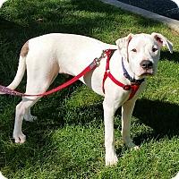 Adopt A Pet :: Watts - Bardonia, NY