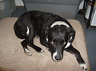 Labrador Retriever Mix Dog for adoption in Dothan, Alabama - Rex