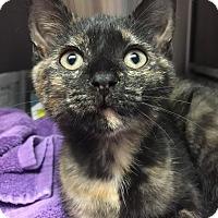 Adopt A Pet :: Treasure - East Brunswick, NJ