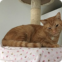 Adopt A Pet :: Tigger Too - Middletown, NY