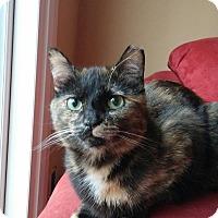 Adopt A Pet :: Mimi - Cincinnati, OH