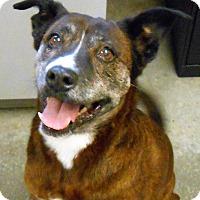 Adopt A Pet :: Shasta (Sasha) - Lancaster, PA