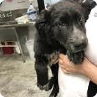 Adopt A Pet :: Cheesecake - Paducah, KY