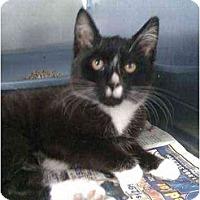 Adopt A Pet :: Gilly - Moses Lake, WA