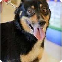 Adopt A Pet :: Jazz - Chesapeake, VA