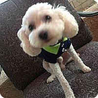 Adopt A Pet :: LEO - Mission Viejo, CA