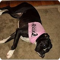 Adopt A Pet :: Daisy - Grafton, MA