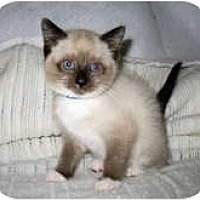 Adopt A Pet :: Jack - Shelton, WA