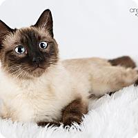 Adopt A Pet :: Ella - Eagan, MN
