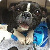 Adopt A Pet :: Lily - San Antonio, TX
