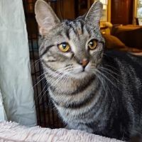Adopt A Pet :: Mary - Berkeley Hts, NJ