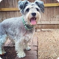 Adopt A Pet :: Bailey - Austin, TX