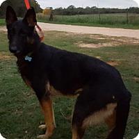 Adopt A Pet :: LIBERTY - SAN ANTONIO, TX