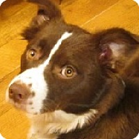Adopt A Pet :: Athena - Oliver Springs, TN