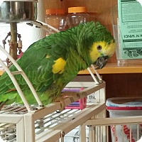 Adopt A Pet :: Zeke - Lenexa, KS