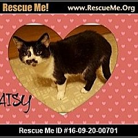 Adopt A Pet :: Daisy - Highland, MI