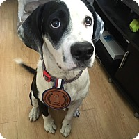 Adopt A Pet :: Petey - Tampa, FL