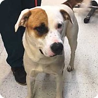 Adopt A Pet :: Chance - Dawson, GA