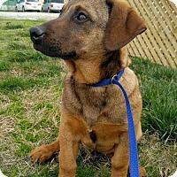 Adopt A Pet :: Nola - Spartanburg, SC