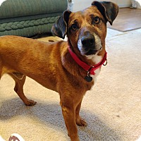 Adopt A Pet :: Larry - Richmond, VA