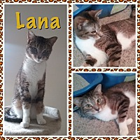 Adopt A Pet :: Lana - Cedar Springs, MI