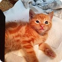 Adopt A Pet :: Einstein - Atlanta, GA