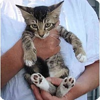 Adopt A Pet :: Toby - New Egypt, NJ