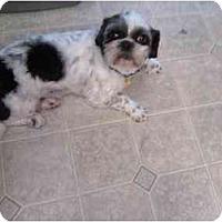 Adopt A Pet :: Buddy and Sammy - Longmont, CO