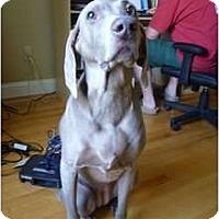 Adopt A Pet :: Heidi - Attica, NY