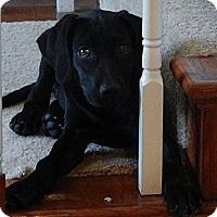 Adopt A Pet :: Dakota - Silsbee, TX