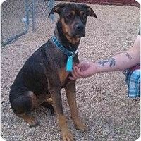 Adopt A Pet :: Madison - Alexandria, VA
