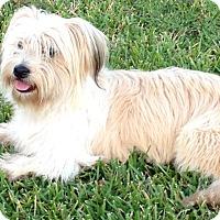 Adopt A Pet :: Boomer - Sugarland, TX