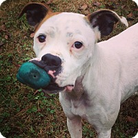 Adopt A Pet :: Marilyn - Westminster, MD