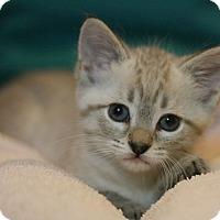Adopt A Pet :: Sterling - Canoga Park, CA