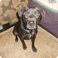Adopt A Pet :: Toby - North Jackson, OH