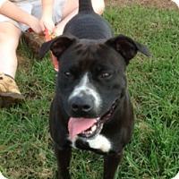 Adopt A Pet :: Reba - Medora, IN