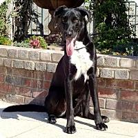 Adopt A Pet :: Cody - Lathrop, CA