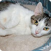 Adopt A Pet :: Melody - McCormick, SC