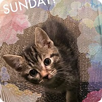 Adopt A Pet :: Easter Litter: Sunday - Akron, OH