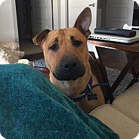 Adopt A Pet :: Mack - Houston, TX