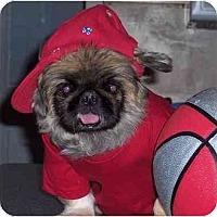 Adopt A Pet :: Benji - Mays Landing, NJ