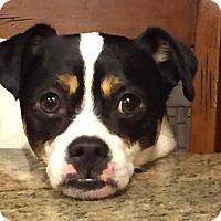 Adopt A Pet :: Burton - Gig Harbor, WA