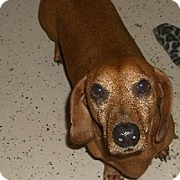 Adopt A Pet :: Oscar - Georgetown, KY