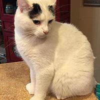 Adopt A Pet :: Ziggy - McKinney, TX