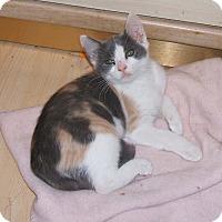 Adopt A Pet :: JEWEL - Acworth, GA