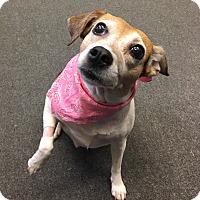Adopt A Pet :: Connie(aka Cici) - Avon, OH