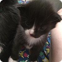 Adopt A Pet :: Rocket - Helotes, TX