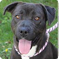 Adopt A Pet :: DELILAH - Red Bluff, CA