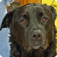 Adopt A Pet :: Bogy - Sprakers, NY